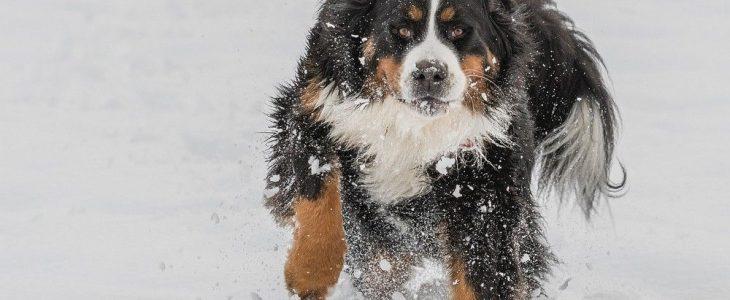 Tips om je huisdier comfortabel door de winter te loodsen