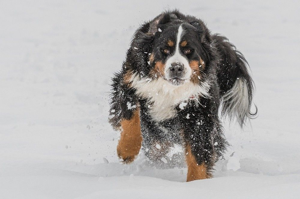 Tips om je huisdier comfortabel door de winter te loodsen
